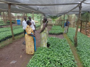 Community nursery to enhance agro-forestry and tree palnting.