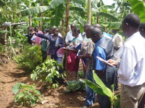 Support Households to engage in sustainable agricultural production