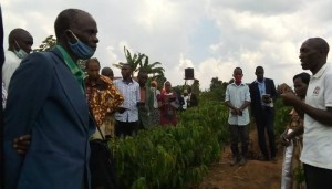 Senior citizen listens to a NUCAFE trainer - on farm training at Luguzi coffe farm