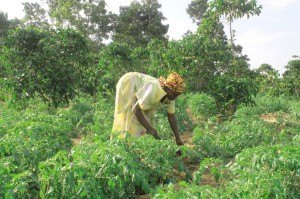 Support Households undertake commercialized agricultural production